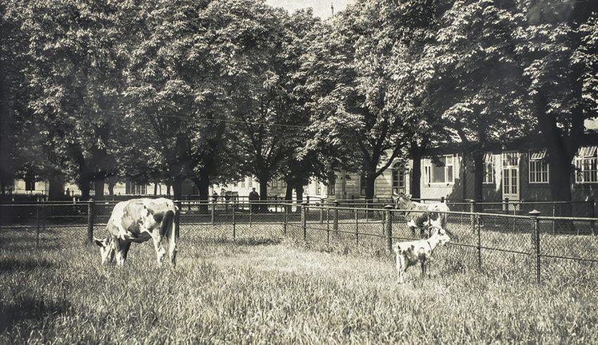 Großer Hof