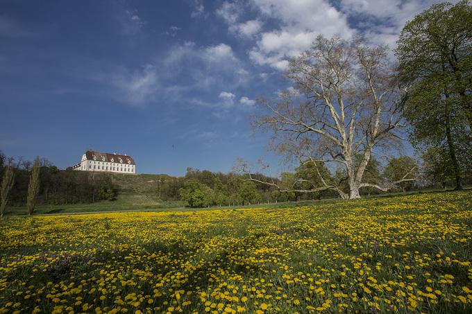 Schloss Stetteldorf mit Blumenwiese