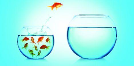Fisch alleine.jpg