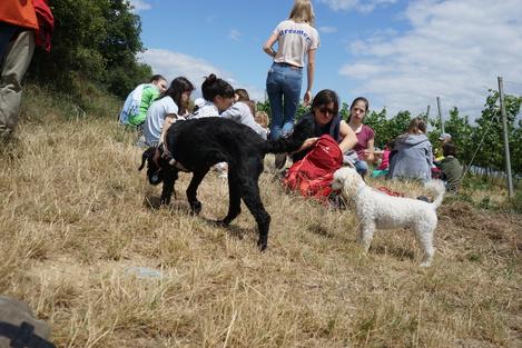 Wandertag 2018 - Sommerliches Picknick in den Weingärten mit Hunden
